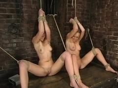 trixie kitten, Cloe Hart and Audrey Leigh