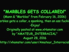 Marbles gets collared