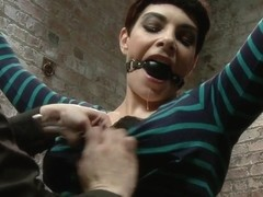 Annika Returns to HogTied